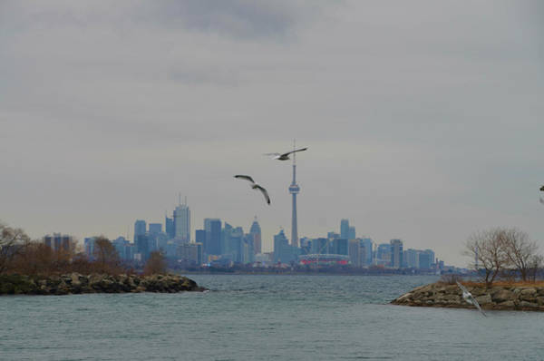 Photograph - Toronto by Bill Cannon