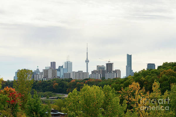 Photograph - Toronto Skyline In Fall  by Les Palenik