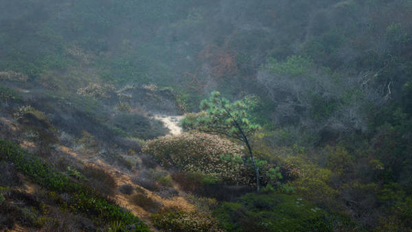 Gully Photograph - Torrey Pines Ravine by Joseph Smith
