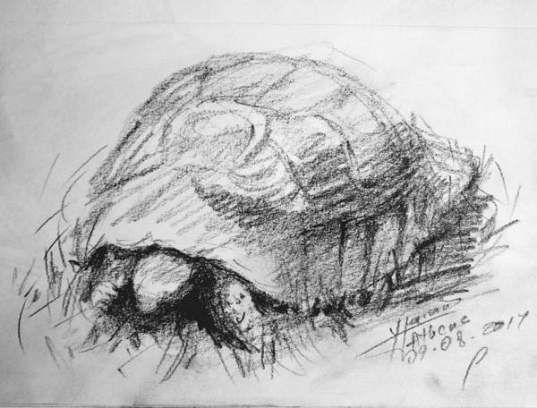 Wall Art - Drawing - Tortoise by Ylli Haruni