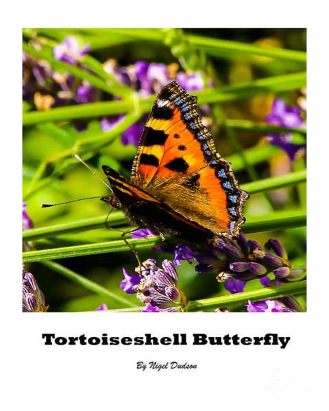 Tortoiseshell Butterfly. Art Print