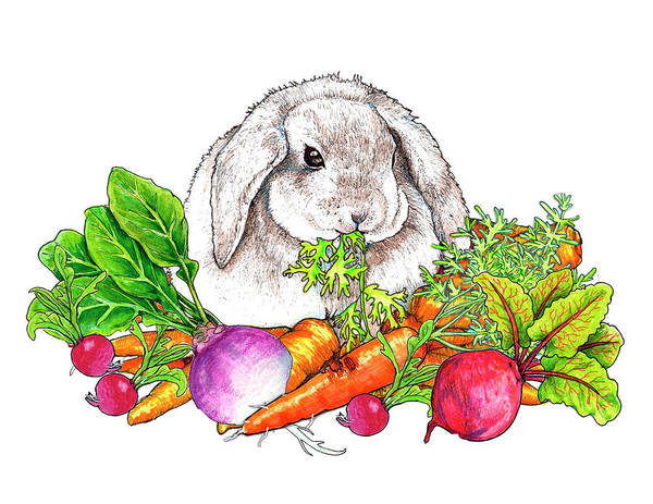 Vegan Drawing - Tossed Salad by Julie Townsend