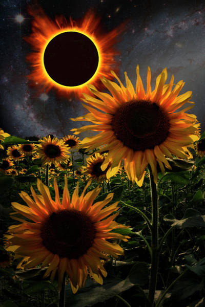 Spring Mountains Digital Art - Total Eclipse Of The Sun Over The Sunflowers by Debra and Dave Vanderlaan