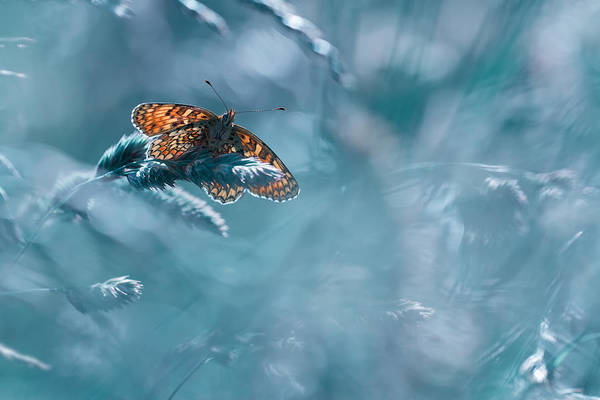 Insects Photograph - Total Kheops by Fabien Bravin