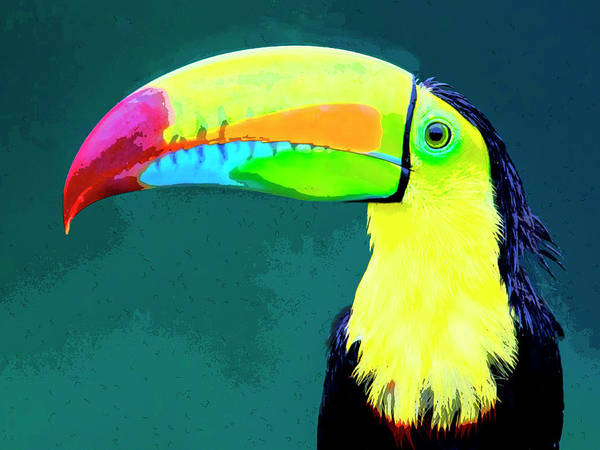 Wall Art - Photograph - Toucan by Dominic Piperata