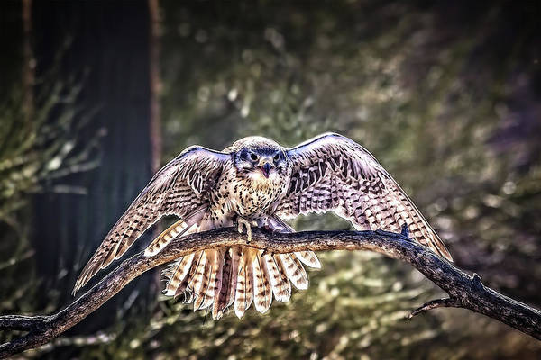 Photograph - Touch Down by Mike Stephens