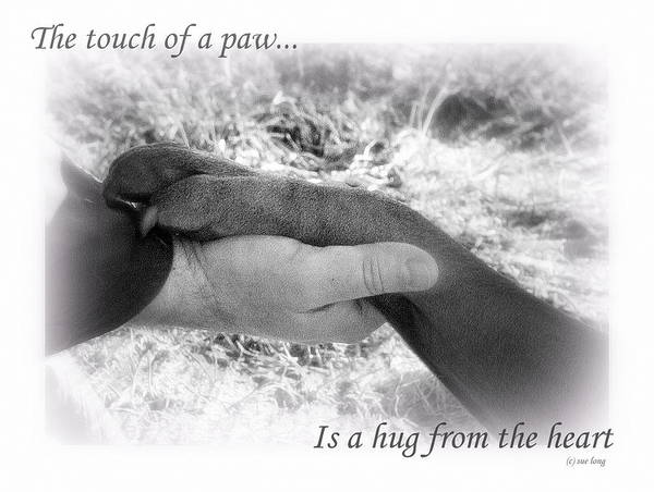 Wall Art - Photograph - Touch Of A Paw by Sue Long