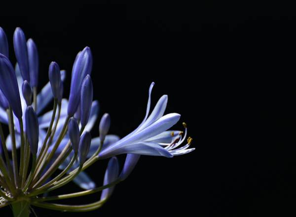 Photograph - Touch Of Violet by Fraida Gutovich