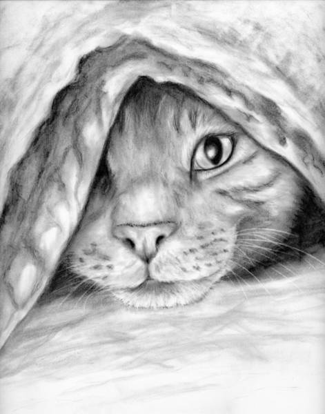 Tabby Drawing - Toulouse by Elizabeth Gyles Johnson