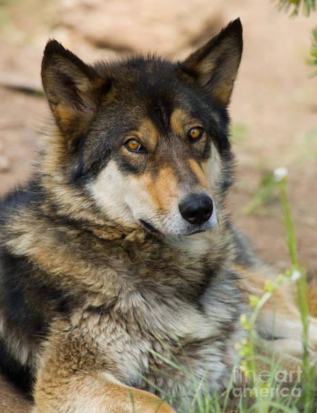 Photograph - Tour Of Rocky Mountain Wildlife Foundation by Steve Krull