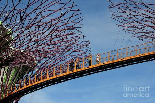 Photograph - Tourists On Ocbc Skyway Between Supertrees At Gardens By The Bay Singapore by Imran Ahmed