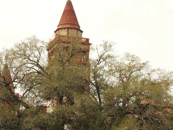Flagler Photograph - Tower Behind The Tree by Nancy Hopkins