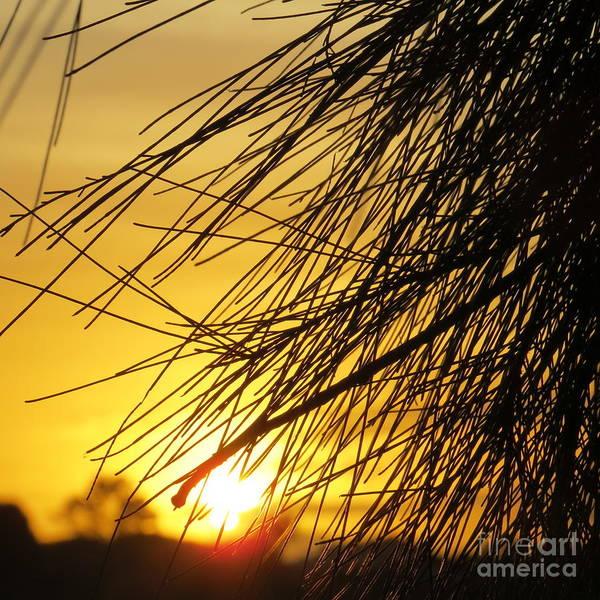 Evie Photograph - Townsville Sunset by Evie Hanlon