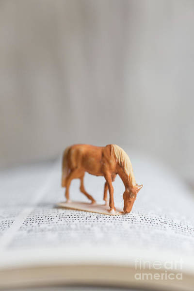 Photograph - Toy Horse by Edward Fielding