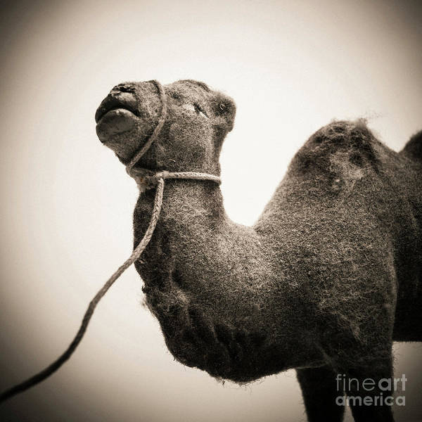 Wall Art - Photograph - Toy Representing A Camel. by Bernard Jaubert