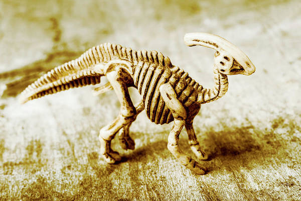 Bone Photograph - Toys And Artefacts by Jorgo Photography - Wall Art Gallery