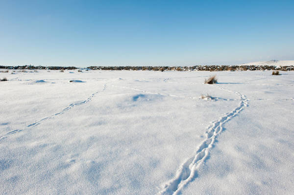 Tracks In The Snow Art Print
