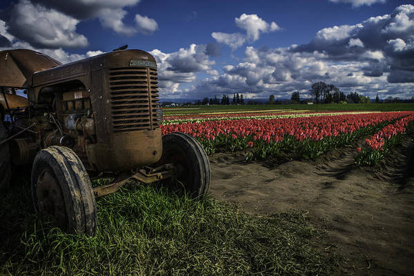 Photograph - Tractor N' Tulips by Ryan Smith