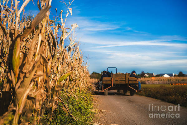 Photograph - Tractor On The Corn Field by Alissa Beth Photography