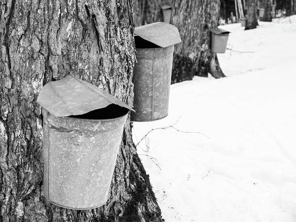 Wall Art - Photograph - Traditional Maple Sap Collection Galvanized Buckets Vermont by Edward Fielding