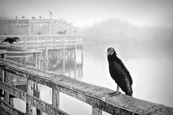 Photograph - Trail And Vulture Bw by Rudy Umans