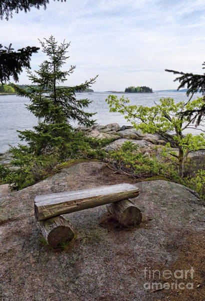 Photograph - Trail Bench, Porter Preserve, Boothbay, Maine  -70685 by John Bald