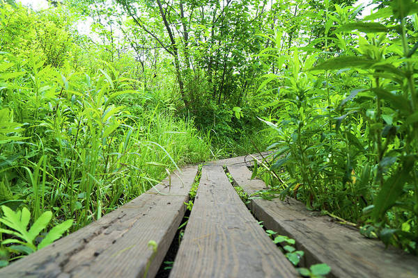 Photograph - Trail by Christopher Brown