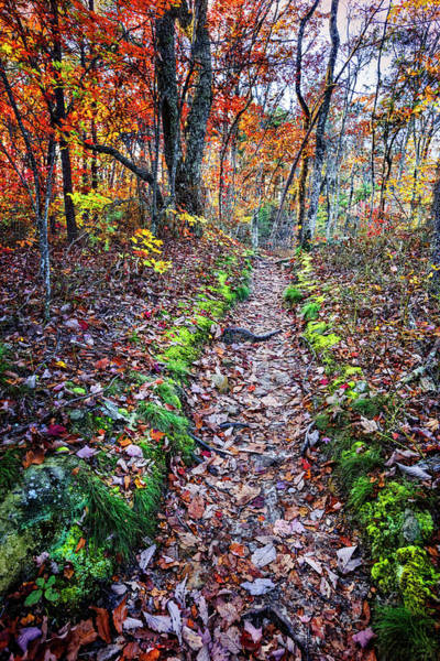 Cloudland Canyon Photograph - Trail In Autumn Color by Debra and Dave Vanderlaan