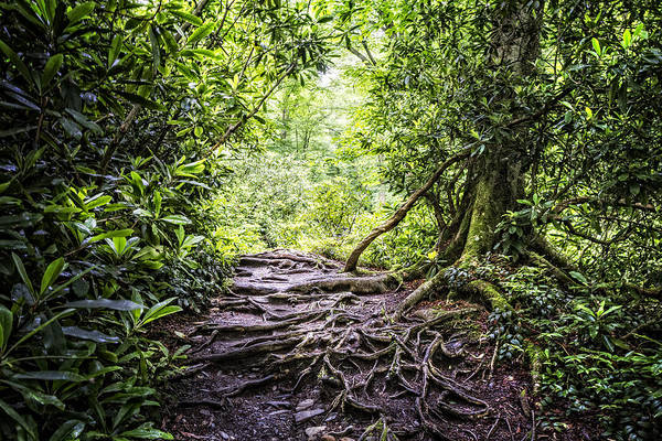 Photograph - Trail In The Forest by Debra and Dave Vanderlaan