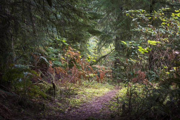 Photograph - Trail In The Forest by Robert Potts