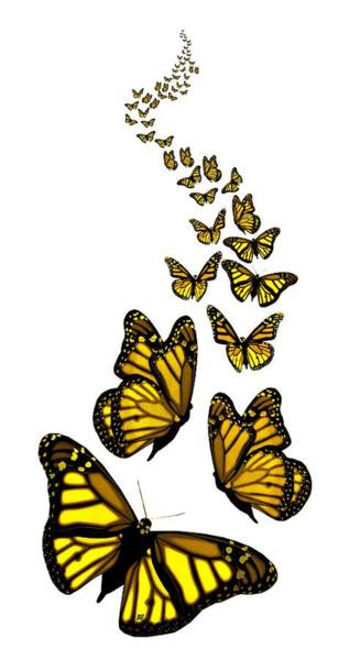 Digital Art - Trail Of The Yellow Butterflies Transparent Background by Barbara St Jean