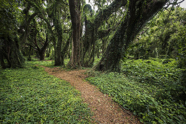 Photograph - Trail Of Trees by Jon Glaser