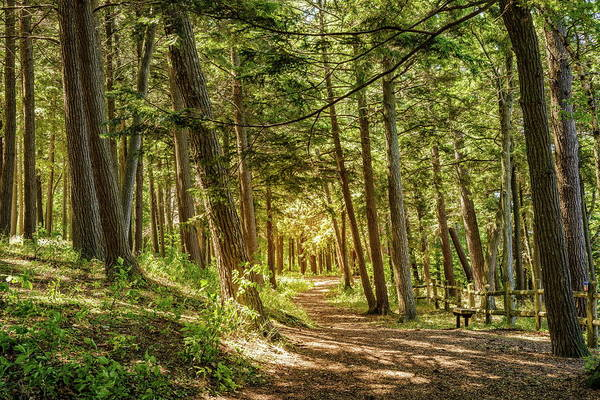 Charlevoix Photograph - Trail Through The Woods by Alexey Stiop