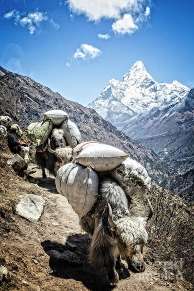 Photograph - Trail To Everest by Scott Kemper