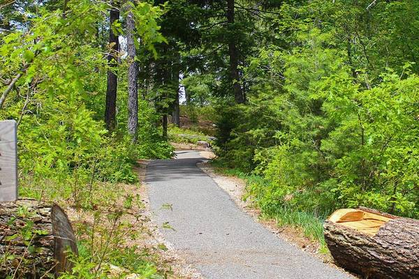 Willett Photograph - Trail To The Trussel by Diana Willett