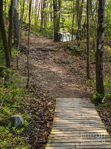Photograph - Trail Up To Jewell Falls, Portland, Maine  -72128 by John Bald