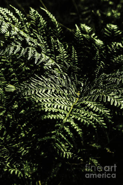 Dark Green Wall Art - Photograph - Tranquil Botanical Ferns by Jorgo Photography - Wall Art Gallery