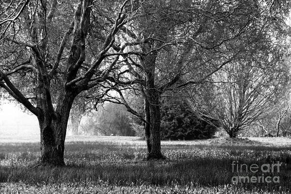 Photograph - Tranquil Landscape Black And White by Sue Harper