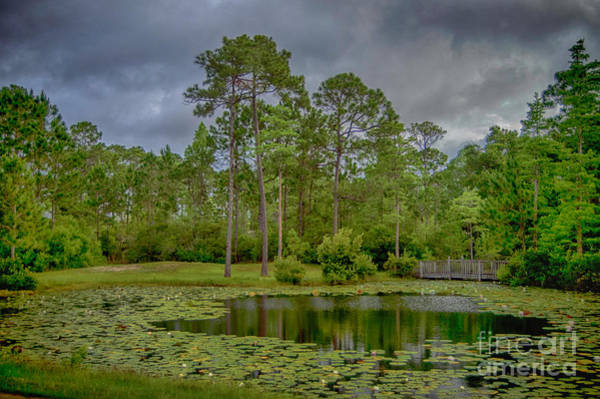 Photograph - Tranquil Pond by Judy Hall-Folde