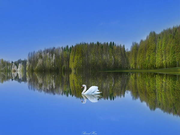 Photograph - Tranquility by Bernd Hau