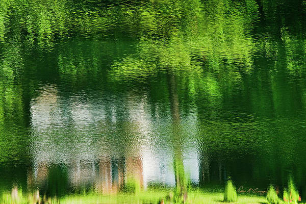 Photograph - Tranquility by Dan McGeorge