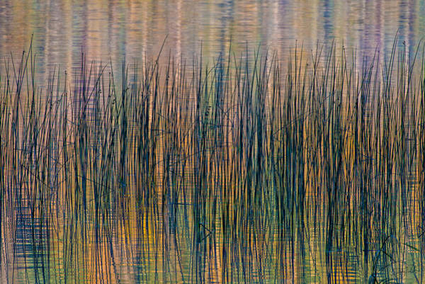 Photograph - Tranquility by Doug Gibbons