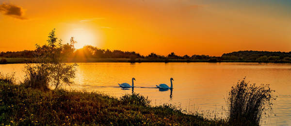 Photograph - Tranquility by Nick Bywater