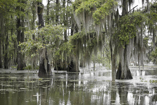 Swamp Photograph - Tranquility Swamp by Betsy Knapp