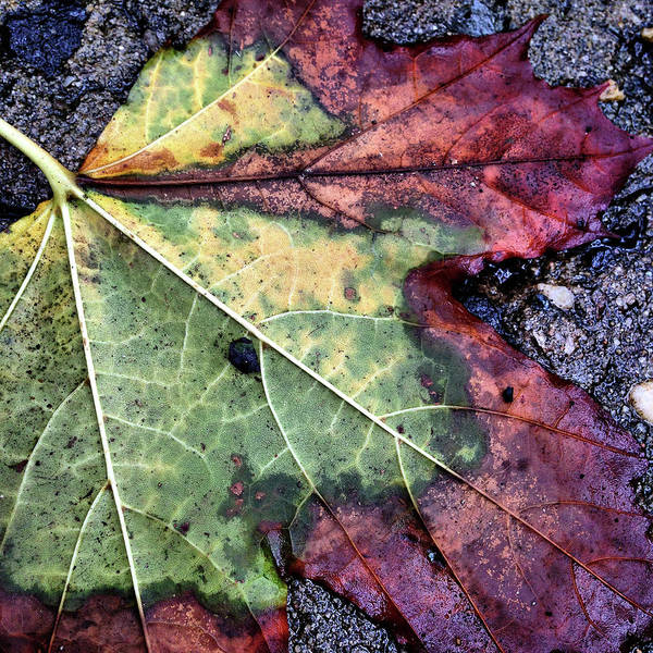Photograph - Transitioning by Cate Franklyn