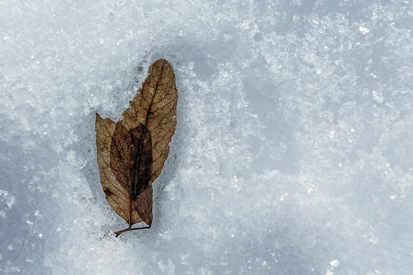 Photograph - Transitory by Belinda Greb