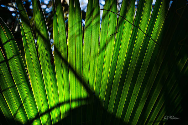 Photograph - Translucent Green by Christopher Holmes