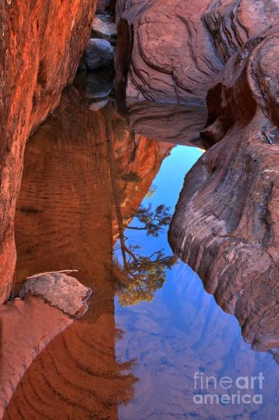 Photograph - Translucent Reflections At Zion by Adam Jewell