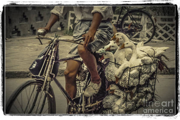 Photograph - Transport By Bicycle In China by Heiko Koehrer-Wagner