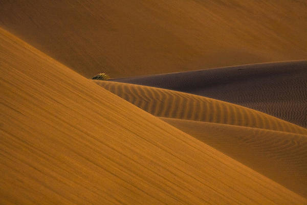 Dunes Photograph - Trapped ... ! by Ali Barootkoob